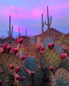Arizona > Posted with written permission from the photographer, . Desert Aesthetic, Nature Aesthetic, Western Photography, Nature Photography, Cute Wallpapers, Wallpaper Backgrounds, Country Backgrounds, Wall Collage, Wall Art