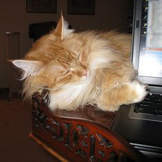 20 Cats Sleeping On Computers