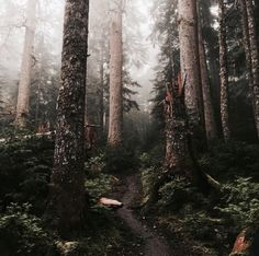 Lost in the forest in a good way.