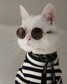 Cat Behavior: Why Cats Bite - Kitty Cute Funny Animals, Cute Baby Animals, Funny Cats, Silly Cats, I Love Cats, Crazy Cats, Cool Cats, Love Pet, Cute Kittens