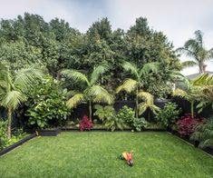 Urban Garden Design Tropical garden - After a long stint overseas, a pair of clever renovators landed in Herne Bay and transformed an historic villa into a home fit for the modern family Back Garden Design, Tropical Garden Design, Tropical Landscaping, Landscaping Ideas, Palm Trees Landscaping, Florida Landscaping, Florida Gardening, Outdoor Landscaping, Patio Ideas