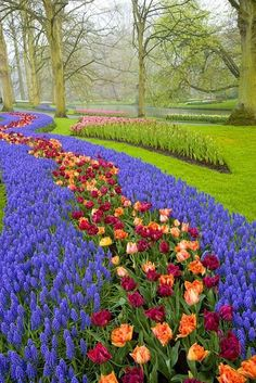 Keukenhof Gardens, near Amsterdam, Netherlands. Peach and maroon tulips. Love Flowers, Beautiful Flowers, Beautiful Places, Parks, Beautiful Landscapes, Beautiful Gardens, Flora, Tulips Garden, Dream Garden
