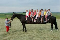 Funny Pictures, Jokes and Gifs / Animations: Longest Horse in the World with 10 Kids on It Funn...
