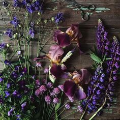 The Garden Nymph Crane Dance, Beltane, Fake Flowers, Purple Flowers, Green Man, Nymph, Natural World, Wiccan, Dandelion