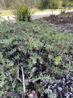 Garden Landscaping, Landscape, Plants, Front Yard Landscaping, Scenery, Plant, Corner Landscaping, Planets