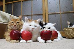 4つの紅玉りんご | のせ猫オフィシャルブログ Powered by Ameba