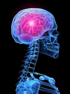 A brain protein responsible for clearing debris may contribute to the progression of multiple sclerosis and Alzheimer's disease according to 2 studies conducted by researchers at Washington University School of Medicine in St. Tumor Cerebral, Brain Tumor, Brain Injury, Autonomic Dysreflexia, Upper Cervical Chiropractic, Workplace Bullying, Emotional Regulation, Brain Health, Mental Health