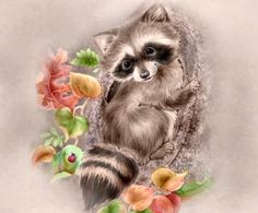 Penny Parker Images - raccoon