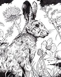 Original Ink Drawing Hare via Etsy. Art And Illustration, Illustrations Posters, Animal Sketches, Animal Drawings, Art Drawings, Decoupage Art, Rabbit Art, Bunny Art, Easter Art