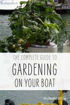 Yes, you can grow greens and herbs (and even tomatoes!) on your sailboat. Check out this clever DIY to help you make your own boat garden. County Cork Ireland, Galway Ireland, Ireland Vacation, Ireland Travel, Boating Tips, Organic Structure, Living On A Boat, Boat Projects, Red Tomato