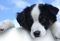 Puppy Vaccinations Schedule, a Complete Guide - dogpackr Toy Puppies For Sale, Cute Puppies, Dogs And Puppies, Baby Animals, Cute Animals, Orthopedic Dog Bed, Puppy Training Tips, New Puppy