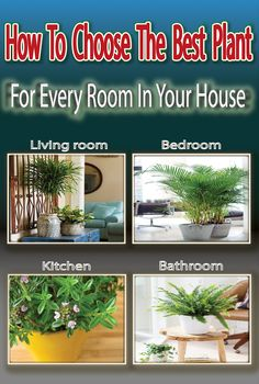 How To Choose The Best #Plant For Every #Room In Your House #LIfehacks #CleaningHacks #NaturalCleaners #CleaningTips #CleaningTricks #HomeCleaning #homecleaningschedule #popularpin #trends #trendingnow #viral #house #beauty #healthy #diy #homemade #wellness #healthylifestyle #healthyliving #hacks