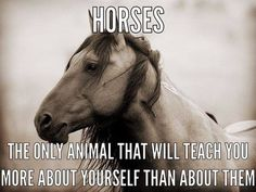 Horses. Teach you more about yourself than them.