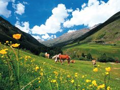 The Oetztal, Austria. Great place to take your 'I spy book of Alpine flowers'.