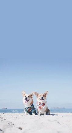 Cute Puppy Dog Pet IPhone 5s Wallpaper