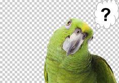 Pirate Parrot, Amazon Parrot, Parrot Bird, Pirates, Pets, Yellow, Animals, Parrot, Animales