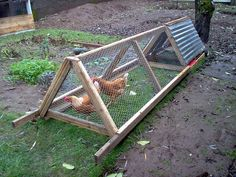 Building A DIY Chicken Coop If you've never had a flock of chickens and are considering it, then you might actually enjoy the process. It can be a lot of fun to raise chickens but good planning ahead of building your chicken coop w A Frame Chicken Coop, Mobile Chicken Coop, Chicken Cages, Portable Chicken Coop, Best Chicken Coop, Backyard Chicken Coops, Chicken Coop Plans, Building A Chicken Coop, Chicken Runs