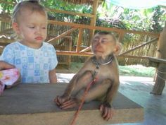 Staring contest between a little girl and a monkey.