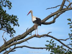 Storks, How To Pose, Bald Eagle, Poses, Photography, Animals, Photograph, Animales, Animaux