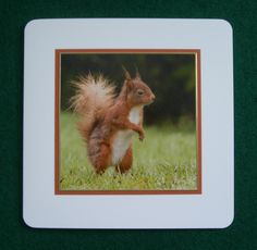 xGx:2014 Red Squirrel on 7x7 (Commission) harrattphotographic.co.uk