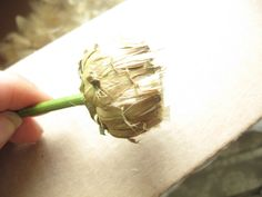 How to Harvest Milk Thistle Seeds