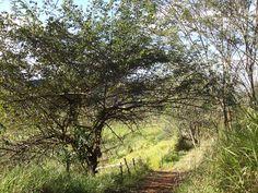 Bosque. Serie Sul de minas, Brasil.