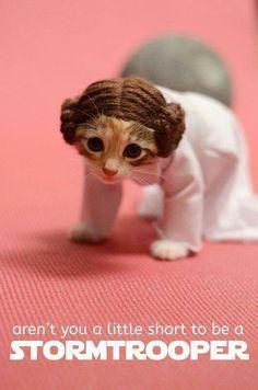 princess meow