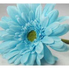 Blue Gerbera Daisies | Bouquet Tiffany Blue Turquoise Silk Gerbera Daisy