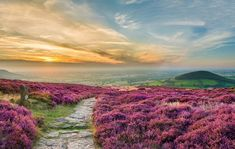 Cleveland Way National Trail, near Whorl Hill in the North York Moors