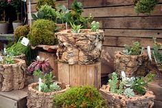 pots made from tree stumps