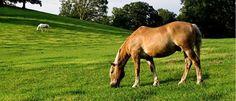 Cursus Mestonderzoek. Wil je zelf je paard, hond of kat monitoren door mestonderzoek, om resistentie voor wormmiddelen te voorkomen en om te weten wanneer ontworming nodig is?