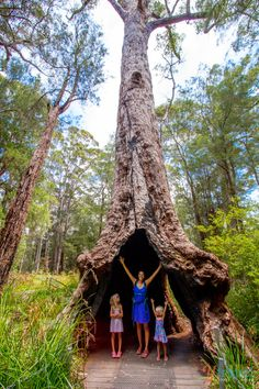 The Valley of the Giants, Western Australia. This place is a must in South West WA, come see why!