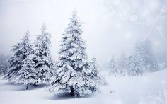 2016-11-08 - wallpaper desktop snow trees - #58708