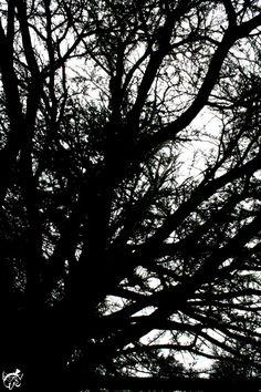 Dans l'étouffante forêt