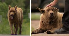 This Old Dog Walks 4 Miles Every Day Just To Say Hi To Everyone In Town