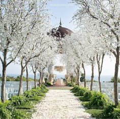 """""""For the love of romantic ceremony setup! Head over heels in love with this breathtaking venue adorned with white tree and flowers along the aisle runner,…"""""""