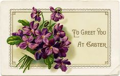 Violets to Greet You at #Easter ~ Free #Printable Vintage Postcard Graphic