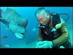 Diver Has Visited The Same Friendly Fish For 25 Years