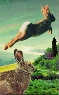 I am One Who helps you to find clarity in stillness. I am the Rabbit, your sixth chakra (3rd eye) companion animal. SC Card.