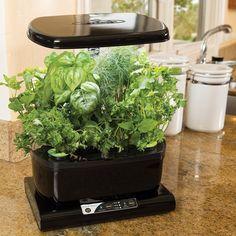Indoor Hydroponic Systems - Easy Home Garden #GardeningTips #HomeGarden…