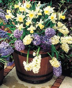 spring garden containers | ... with lasagna gardening is a technique of layering bulbs in containers
