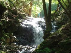 5 Spectacular WaterfallHikes - mostly in Marin