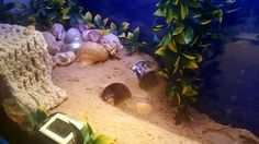 Sand caves. Instant shelter for your hermit crabs. Use a clean, cut top half of a plastic bottle, burrow horizontally into a heap of moist sand to create a sand cave for your hermies, they will love it.