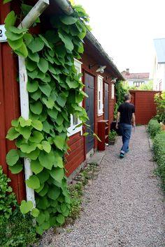 08_pipranka_6G8A3546 Outdoor Balcony, Outdoor Gardens, Garden Plants, Indoor Plants, Dream Garden, Home And Garden, Growing Herbs Indoors, Plant Aesthetic, Growing Gardens