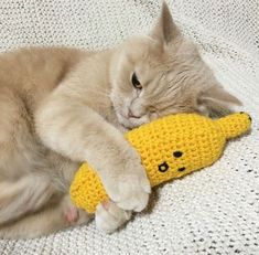 Keeping one eye open, so no one take my catnip banana:)