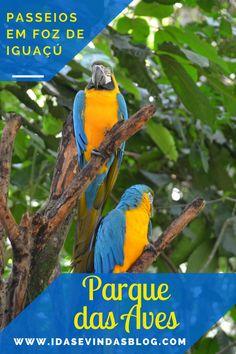 Conheça o maior parque de aves da América Latina!