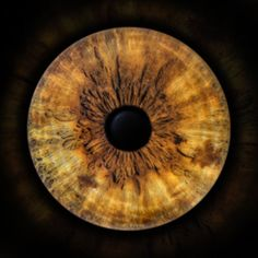 Franchise Business, Photos Of Eyes, Halloween Eyes, Iris, Life Is Beautiful, Unique Art, Peace And Love, Psychedelic, Overlays