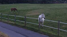 🦓 Horses, Animals, Animales, Animaux, Animal, Animais, Horse