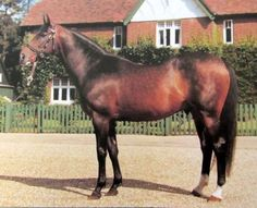 Epsom Derby, Triple Crown Winners, Racehorse, Royal Palace, Thoroughbred, Show Horses, Horse Racing, Around The Worlds, Animals