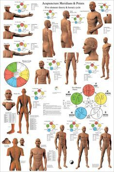 Acupuncture Meridian Points Poster 24 X 36